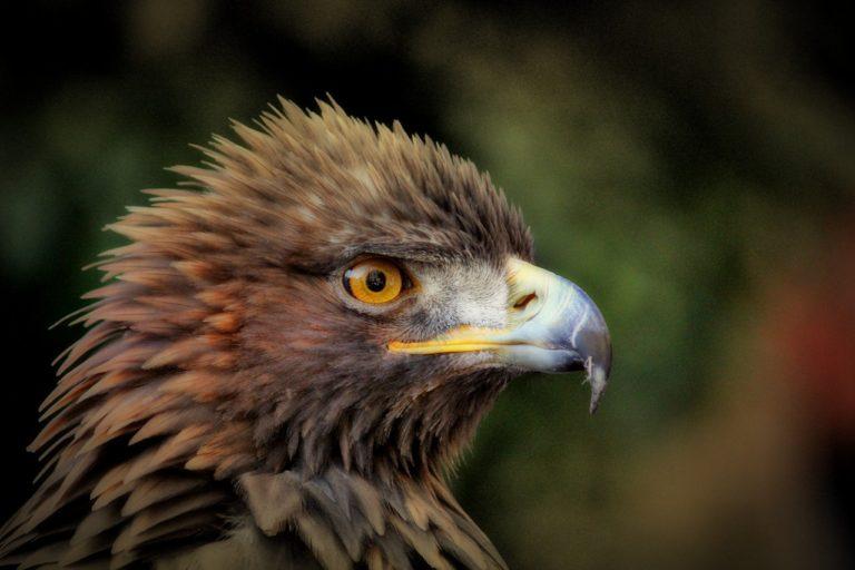 golden prey john sandford lucas davenport thriller