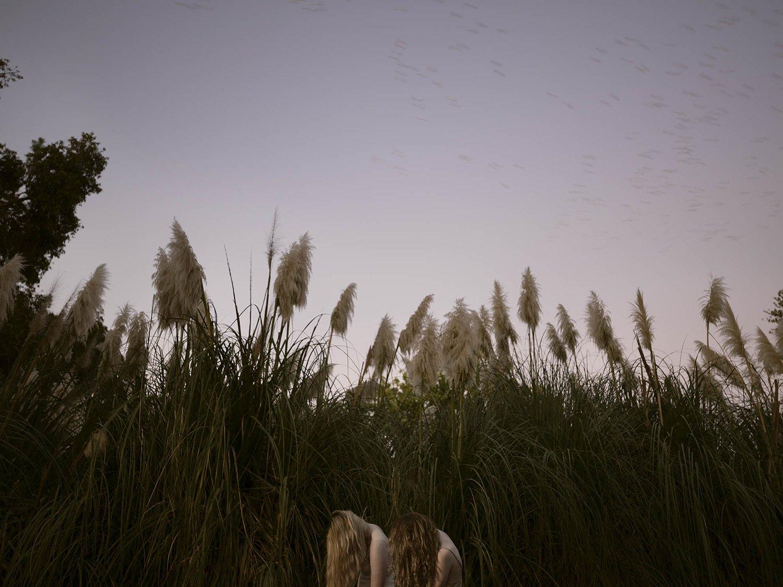 Pampas Grass (Cortaderia selloana) in Autumn, 2017, Tamara Dean.