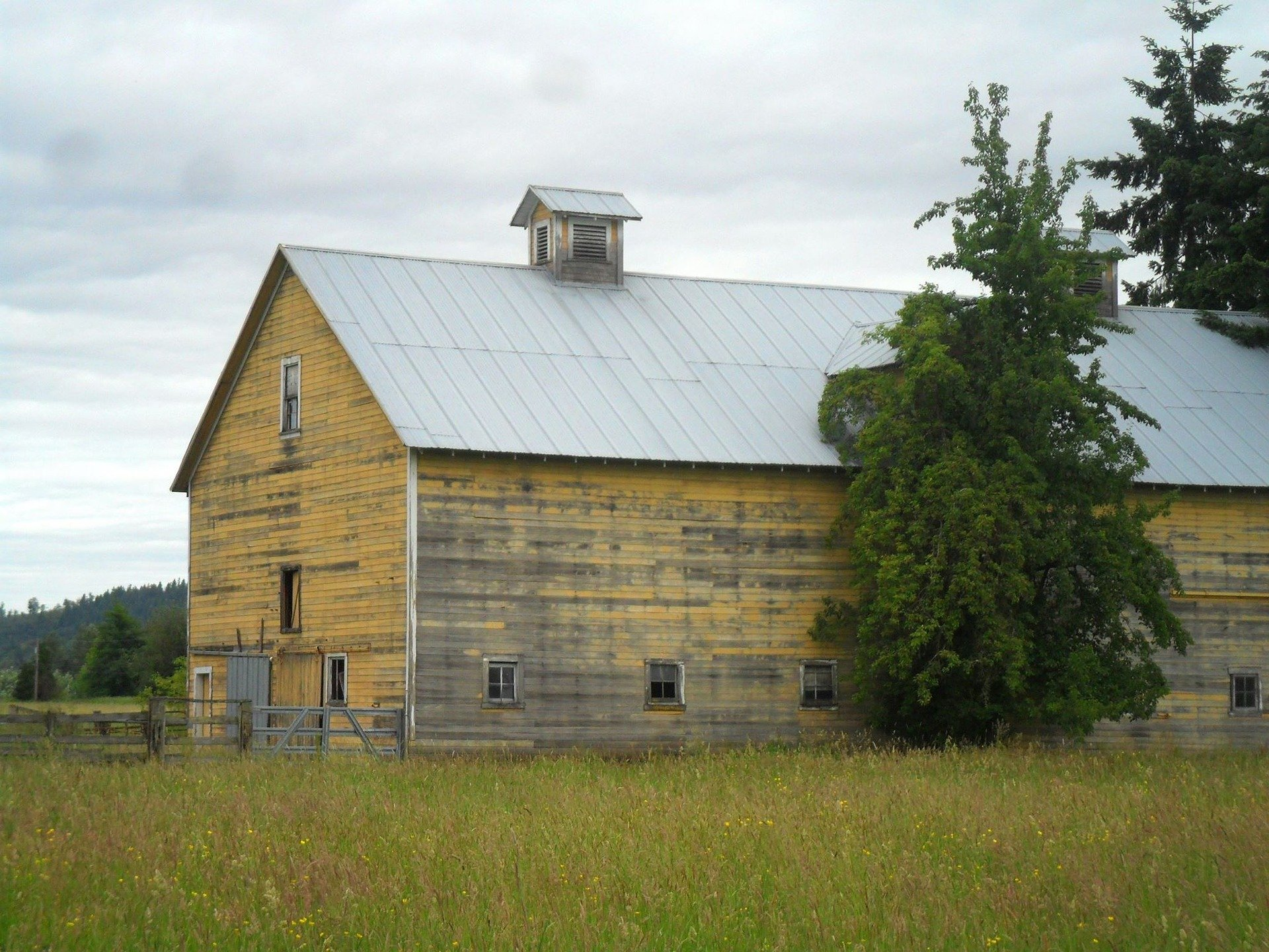 Reunion At The Yellow Barn Crime Short Fiction By Nicky Tomsko