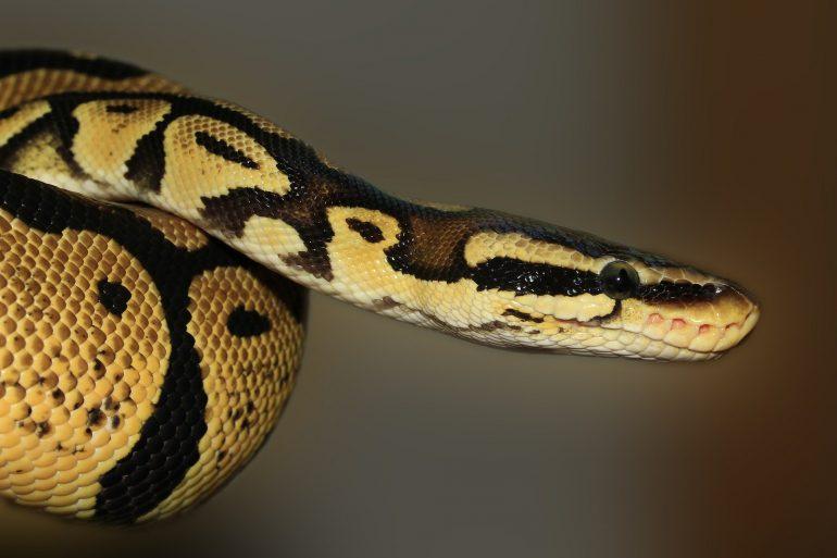 Snake in the Window-Killer at the Door Flash Fiction By Julie Burandt