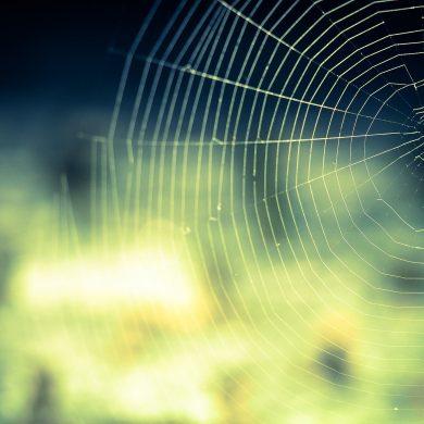 Spider Thriller Flash Fiction By Adrienne Unger
